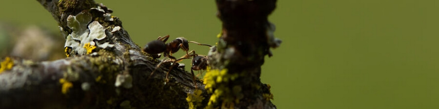 Insectes rampants sur tronc